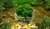 Зеленая жизнь в Севастополе: больные деревья и скандалы