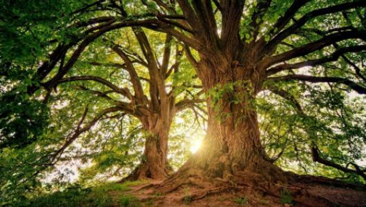Застройщик спилил деревья в Севастополе, желая срубить бабла