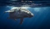 Шокирующие кадры с китами со всего мира