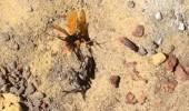 Смертельная схватка шершня и паука. Видео