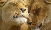 Есть ли среди животных лесбиянки и геи?