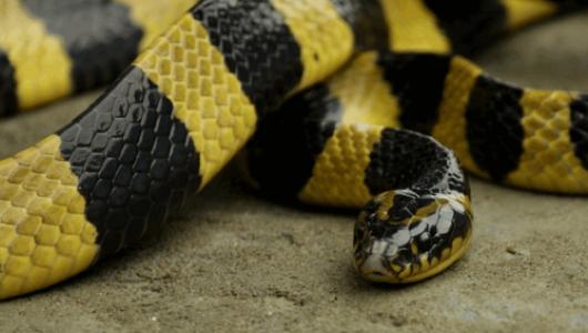 5 животных-извращенцев (ФОТО)