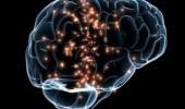 Где в мозге хранится сексуальность