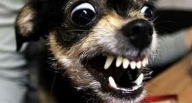 5 самых опасных пород собак в мире