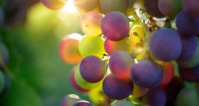 Севастополец хотел купить виноград, но потерял 110 тысяч рублей