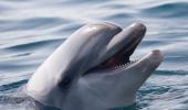 Мишустин предложил ввести запрет на ловлю дельфинов и китов