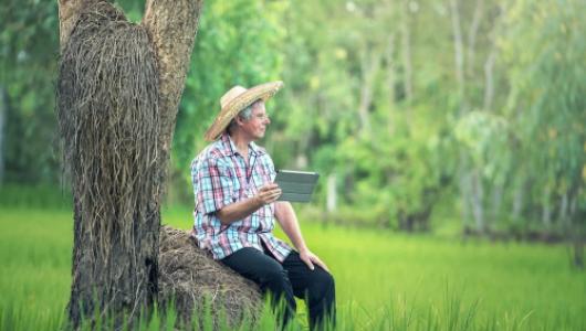 Кто поможет севастопольским фермерам?