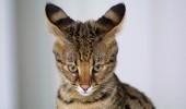 Как менялась красота кошек за 100 лет