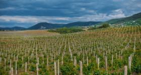 Генеральный директор агрофирма «Золотая Балка»: «Мы не перепродали ни единого гектара с целью обогащения»