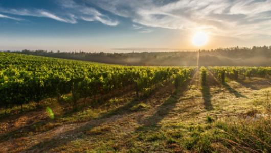Севастопольцы одобрили проект застройки участка агрофирмы «Золотая Балка»